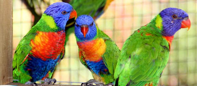 Zoo de Martinique